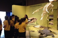10/08 - Visita ao Museu de Ciências Naturais - PUC